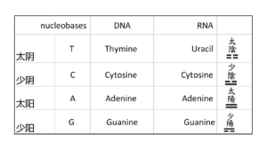 base of DNA  code and IChing